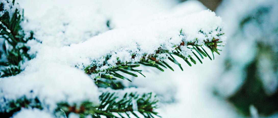 winter-branch